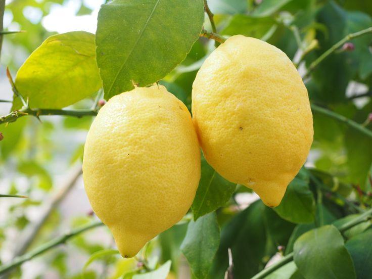 Lo que quizás no sabías acerca del limón