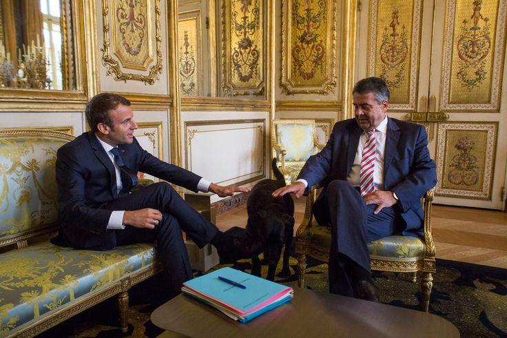 Nemo, le labrador noir croisé de griffon, adopté le week-end dernier par le chef de l'Etat et son épouse, est déjà très à l'aise à l'Elysée. Mercredi,...
