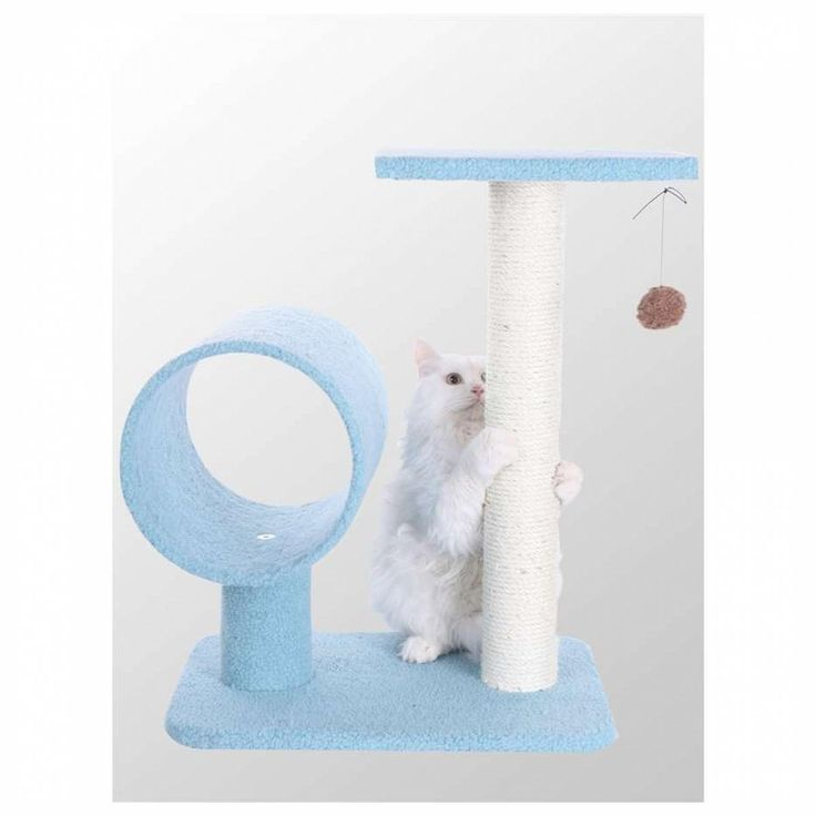 Buy cat, choose from 279 products - Pricefalls.com