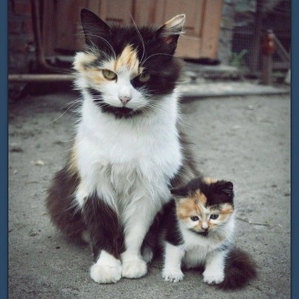 This cat and her mini-me: | If You Instagram Anything, It Better Be Adorable