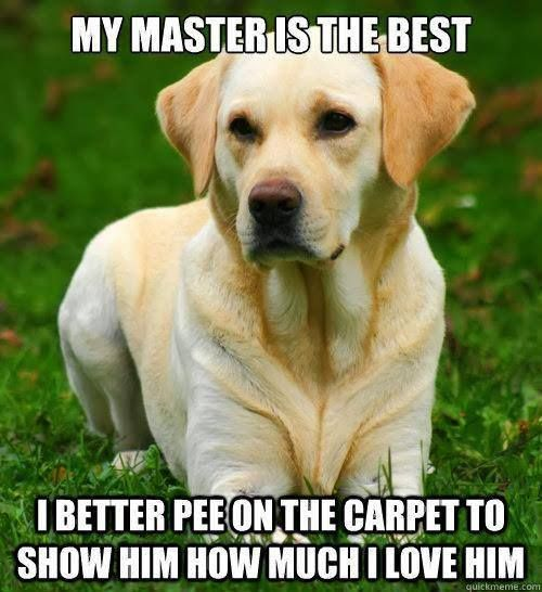 My Dog Peed On My Rug: 15 Best Funny Cleaning Images On Pinterest