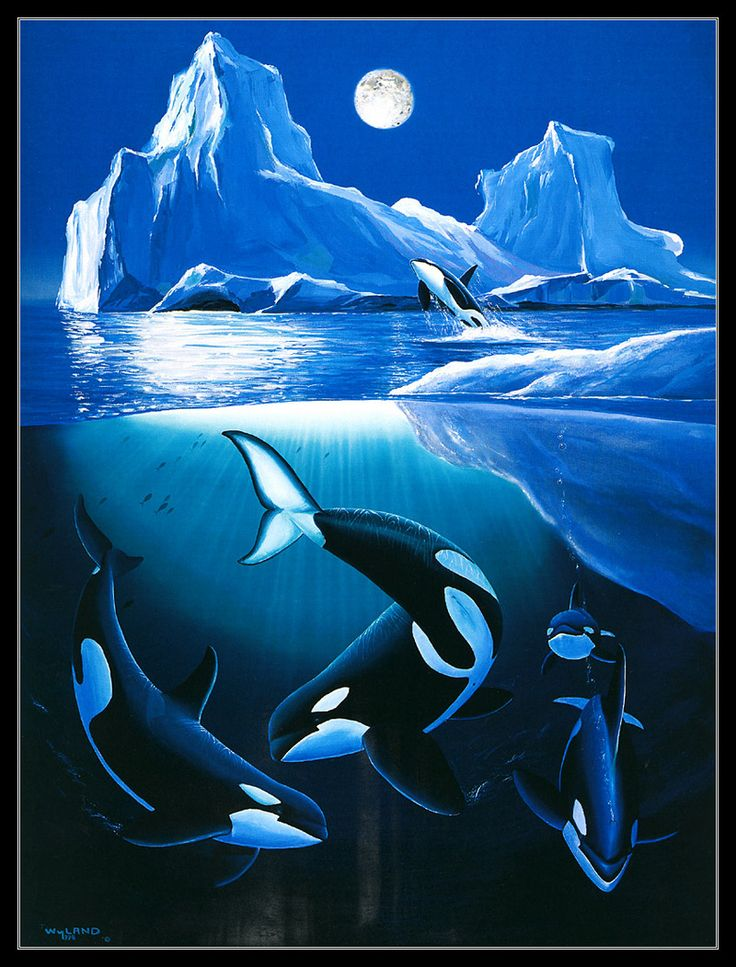 Orca Whales under the Icebergs - Killer Whales - by Wyland