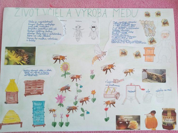 Projekt život včiel