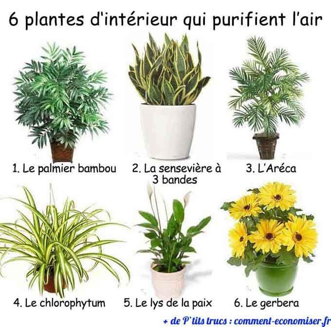 6 plantes d'intérieur qui purifient l'air