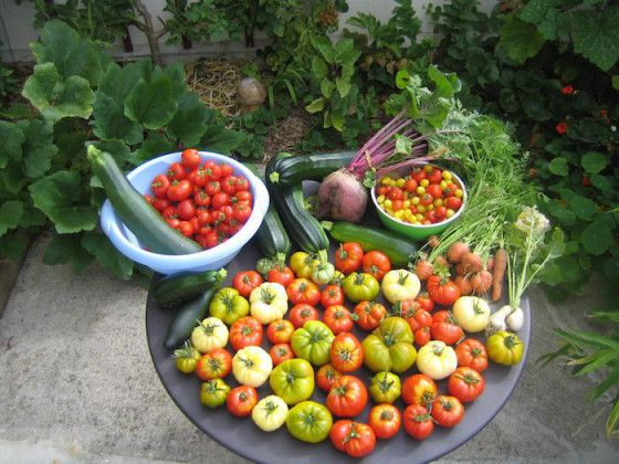 300 kg légumes sur 25m2 Jardin urbain Permaculture / Facebook
