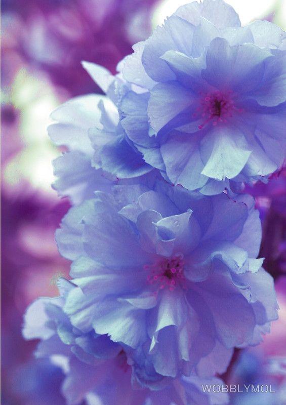 Delightfully Blue flowers - by WOBBLYMOL