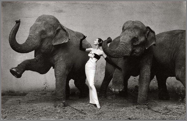 by Richard AvedonPhotographers, Photos, Evening Dresses, Richard Avedon, Elephant, Art, Richardavedon, Fashion Photography, Struction