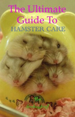 The Ultimate Guide To Hamster Care!!! (Wattpad)
