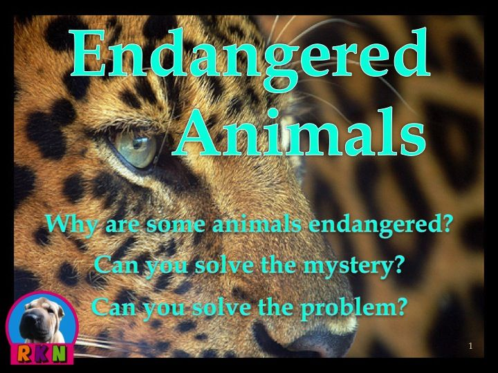 The Ways to Solve on the Endangered Species Essay Sample