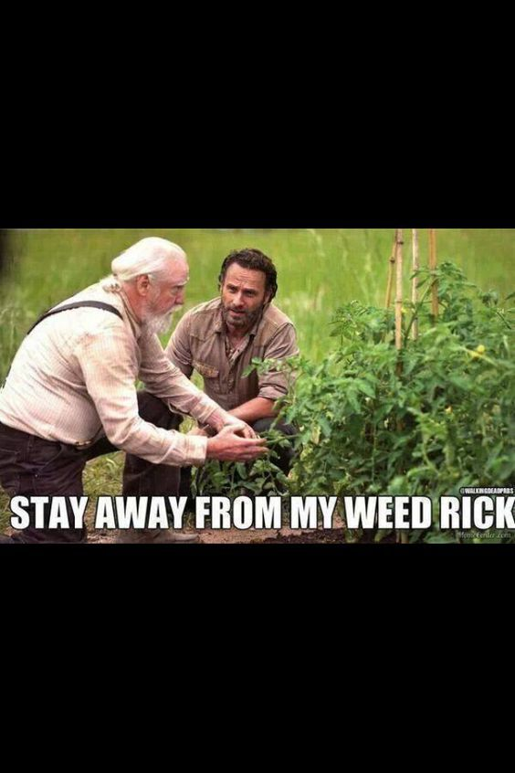 25 Funny Walking Dead Memes #Walking Dead #Memes