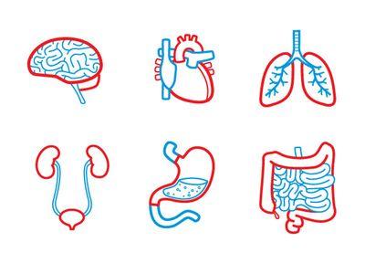 Organ Icons