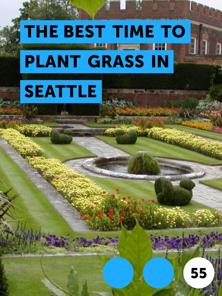 The Best Time To Plant Grass In Seattle Growing Dahlias Garden