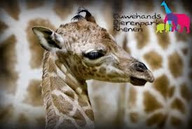 Ouwehands zoo, Rhenen ~ What a zoopendous adventure in Europe's largest covered jungle playground.