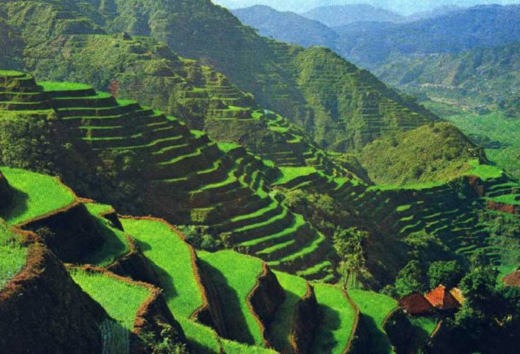 The rice terrace fields of Banaue  country : the Philippines  place : on the Lucon island, north of Manilla
