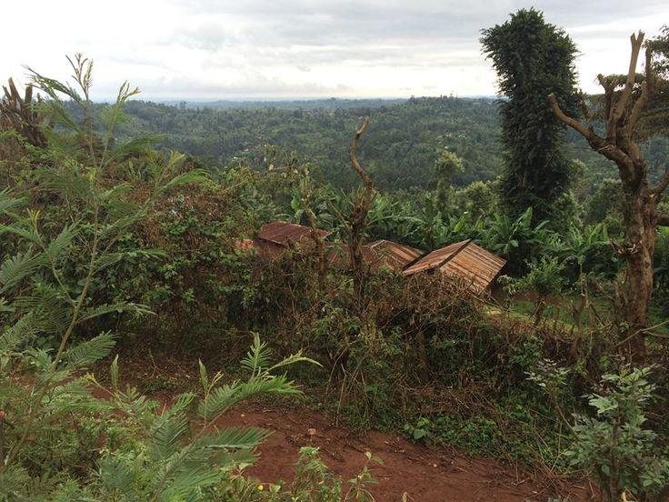 Views over fields in Nyeri Region, Central Kenya