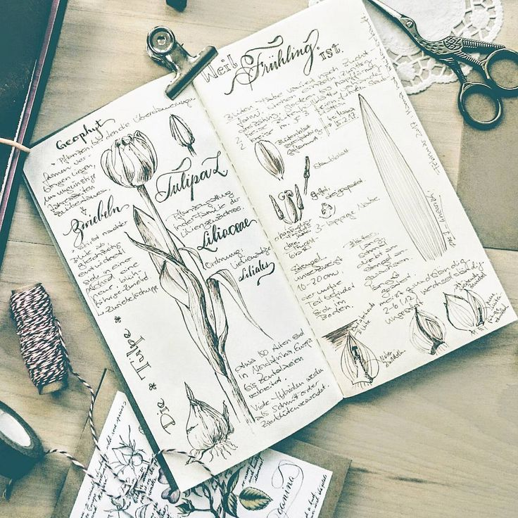 """163 Likes, 6 Comments - Maja (@maja_ink) on Instagram: """"I'm researching my next botanical illustrations. I thought instead of writing everything on a…"""""""