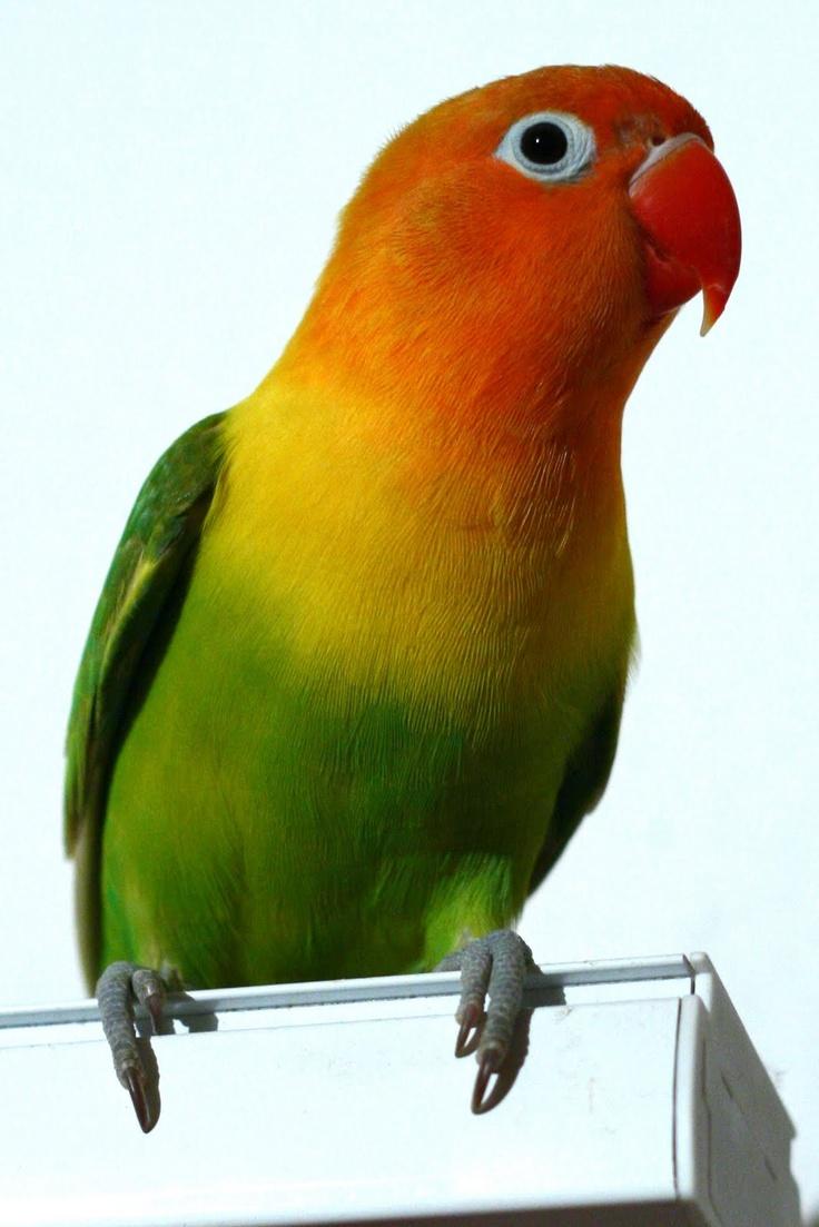 71 best citrus orange yellow green images on pinterest color