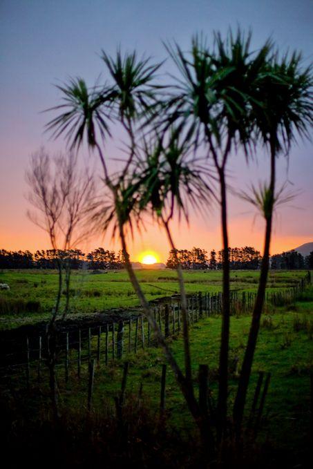 Sunset over Rangiputa farmland (Doubtless Bay, NZ). copyright © Debra Stratford