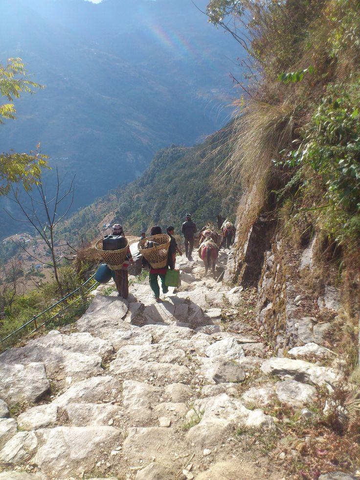 Donkey caravan on steps out of Ghandruk #trekking #Gurung #village #Ghandruk #Ghandrung