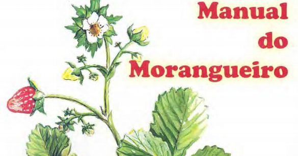 O Blog Agrícola: O Manual do Morangueiro