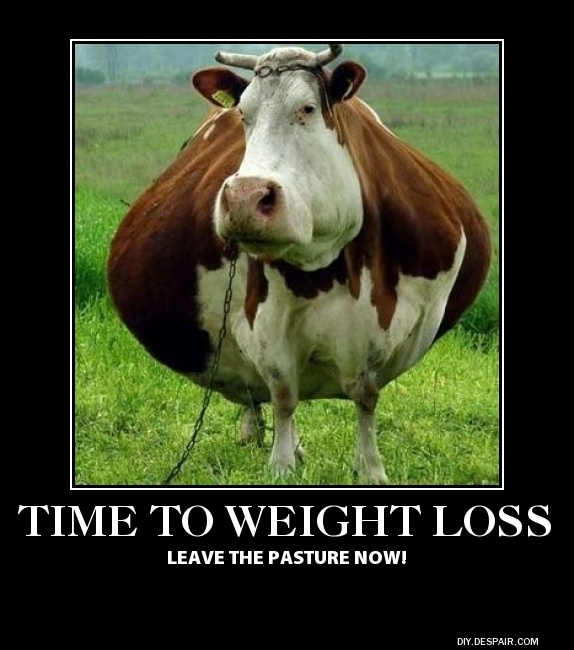 weight loss cow Funny pictures regarding weight loss and ...