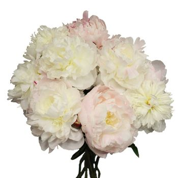S.Temple Blush peony bunch 350 c61c1e51   20 flowers in September for delivery for 180.00, 40 for 330.00 shipped Fed Ex. free.