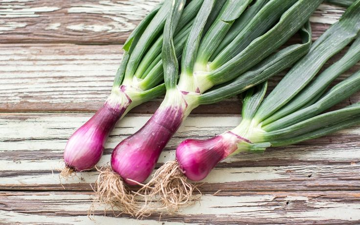 Organic Red Spring Onions