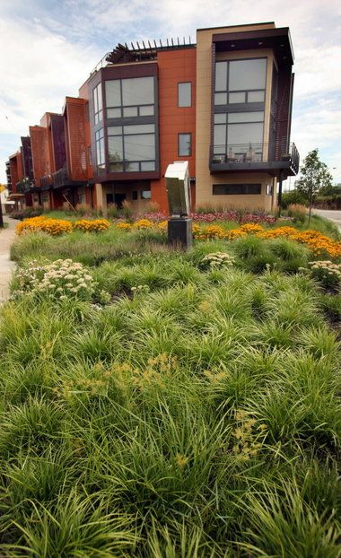 Prairie Landscaping Front Yard