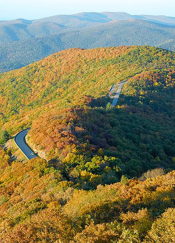 Skyline Drive continues the VA portion of the Blue Ridge Parkway to the north thru Shenandoah National Park. #fallinva