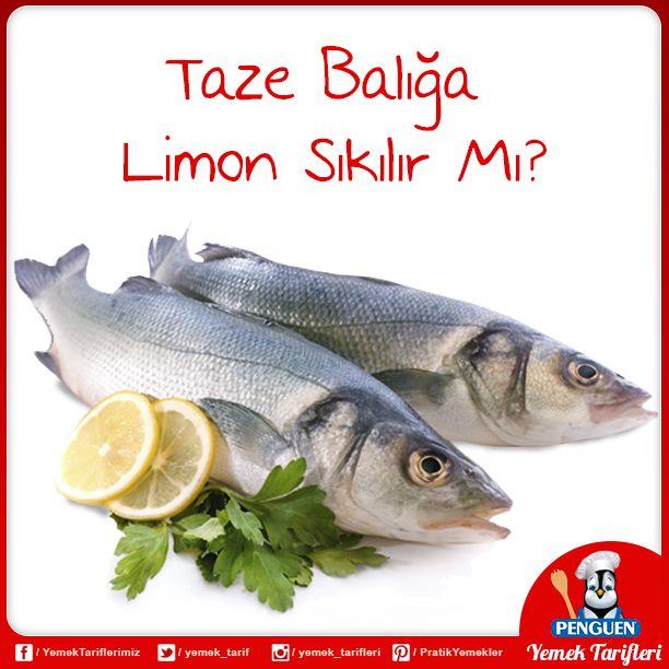 Taze balığa zeytinyağı, az domates ve kıyılmış maydanozdan başka sos katmayın. En lezzetli balık yemeği, balığın doğal lezzetini doya doya duyduğumuz yemektir. Not: Hamsi ve palamut ızgarasına limon sıkabilirsiniz.