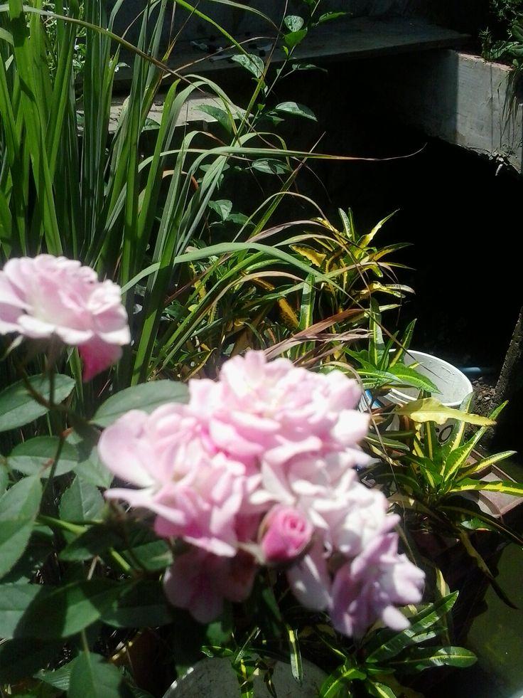Rosa bouquet de novia