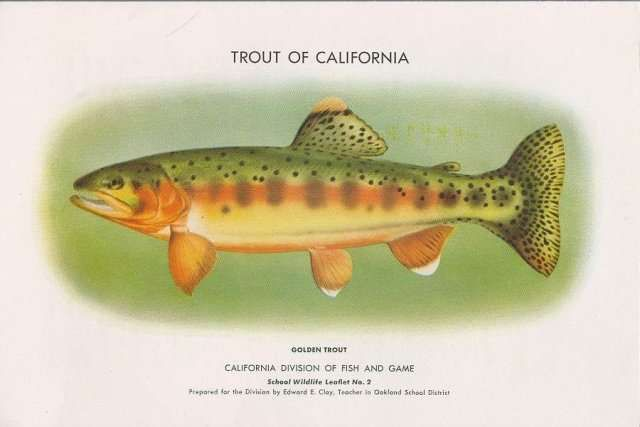 71 best images about california state symbols on for California fish hatcheries