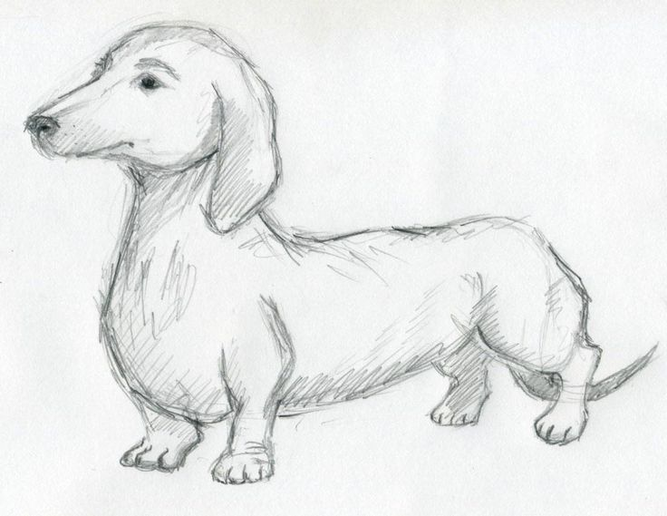Make your dog sketches simply and quickly