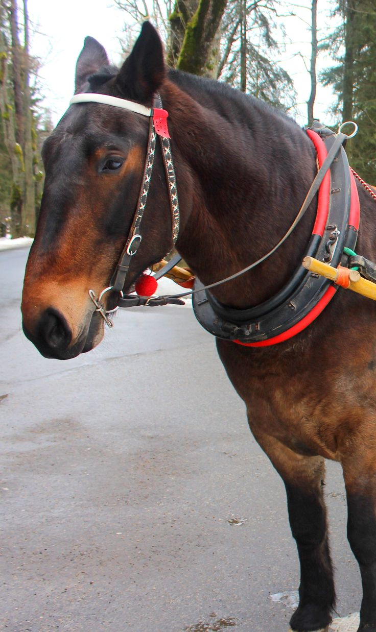 A beautiful horse dressed in traditional Highland gear in Zakopane, Poland. www.travellinghistory.com