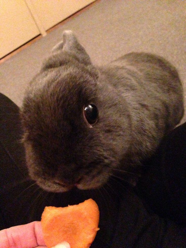 Carrot plzzz miss huge eye