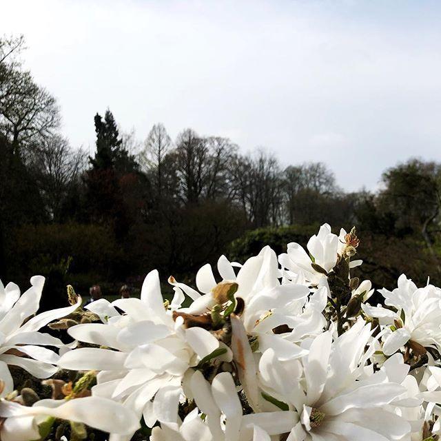 Sternmagnolie Im Botanischen Garten In Munster Botanischer Garten Garten Instagram
