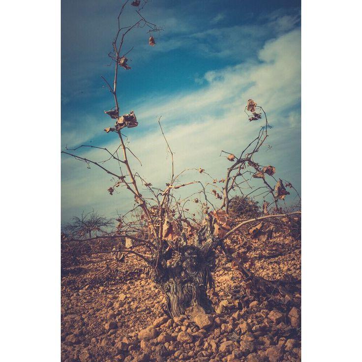 361365 #winery #vinyard #exploretocreate  Hoy estoy literalmente agotada de eso que lo dices así  A-go-ta-da.  Tanto que no tengo fuerzas ni para cambiarle el pañal a BabyL  si lo voy a hacer igual .   Y me toca hacer la cena  me muero en fin.  Voy a morir a otra parte señoras ni fotos nuevas tengo que desastre . .. .. .. .. #hcfotografiatusviajes  #whenpeoplematchplaces  #landscaper  #travelphoto  #igtravel  #instapassport  #passionpassport #eldoradoexperience #lugaresimperdibles…