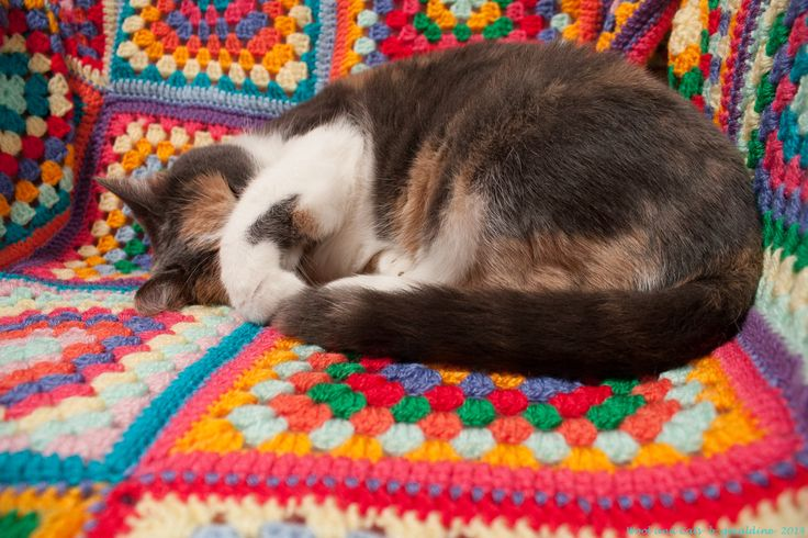 Wool and Cats: Crochet