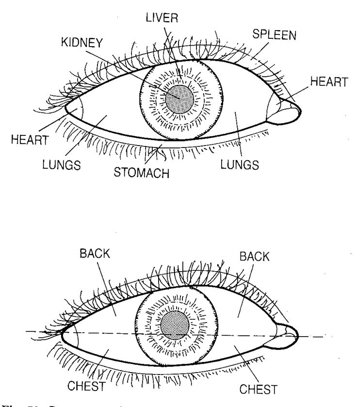 Eye, 5 Senses, Traditional Chinese Medicine (TCM) & Acupuncture , weblog, discussion board, bulletin board, forums