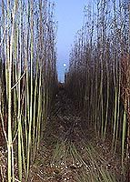 GYO Firewood - Info Page • Willow Suppliers