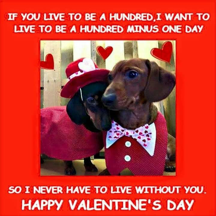 Image result for images of dachshund dog valentine images