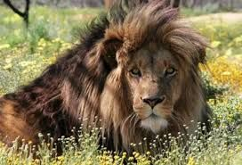 Image result for panthera africa cape town