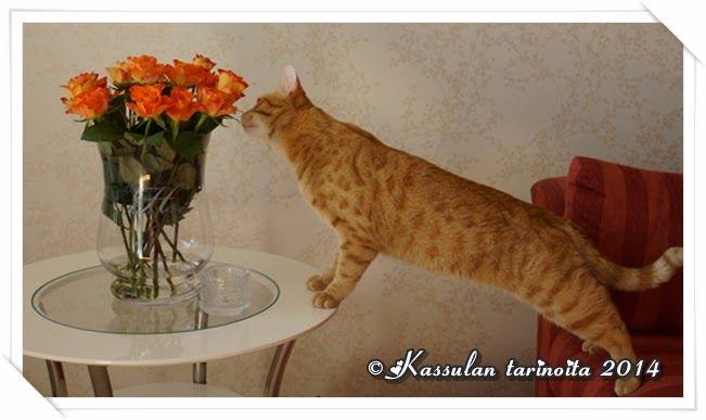 Kassulan tarinoita: Kukkaispoika / Roses are so irresistible