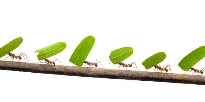 Come difendersi dalle formiche con rimedi naturali   Vivo di Benessere
