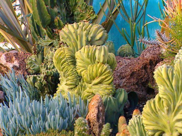417 best Succulent and Cactus garden ideas images on Pinterest
