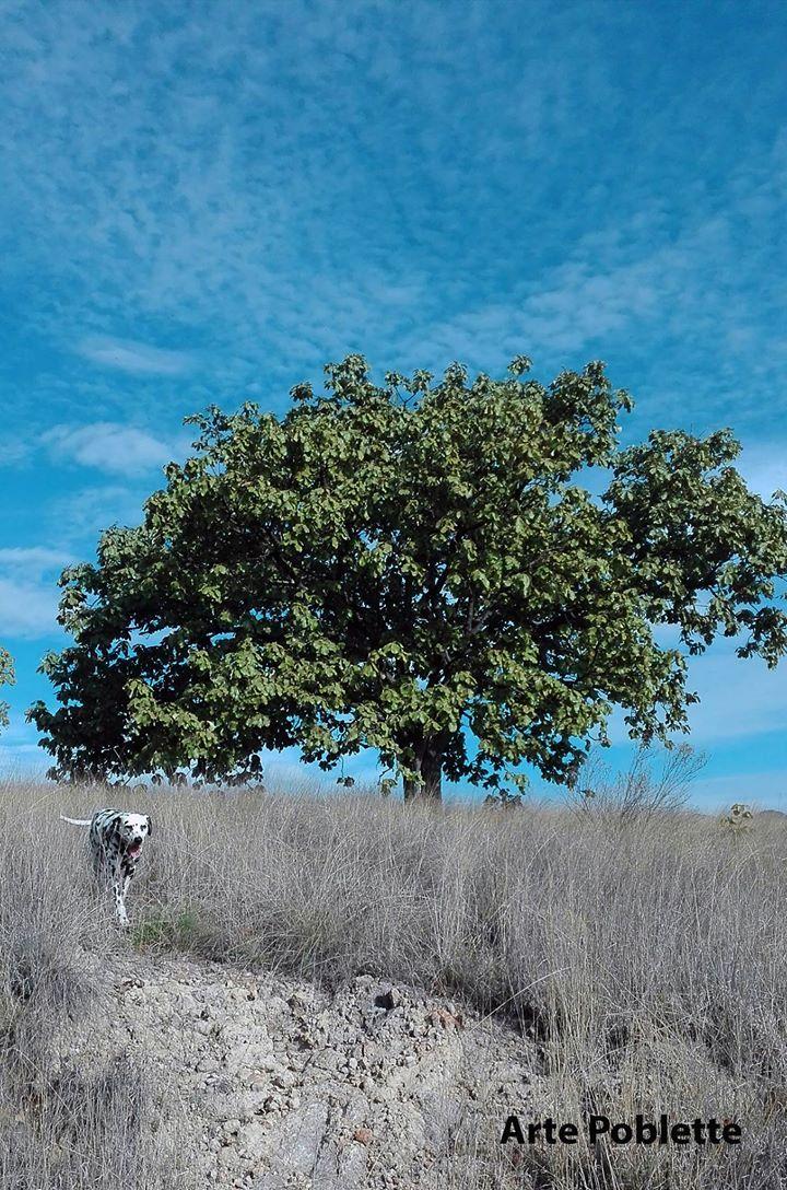 One tree and a dog. Foto tomada en Albaterra por Susana Soto Poblette