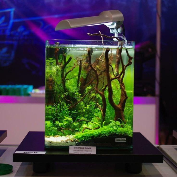 aquarium design avec des poissons