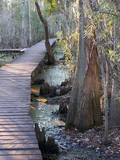 17 Best Images About The Swamps Home Sweet Home On