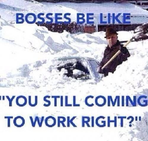 bosses be like funny memes work meme lol funny quote funny quotes humor bosses