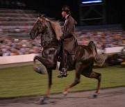 Tennessee Walking Horses : The Humane Society of the United States